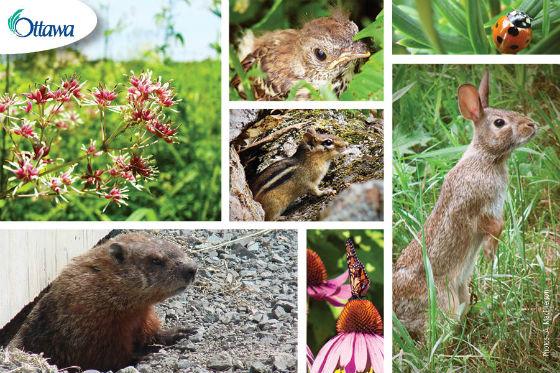wildlife-postcard