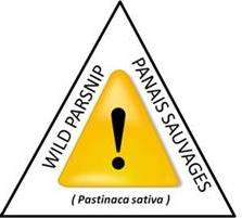 warning parsnip