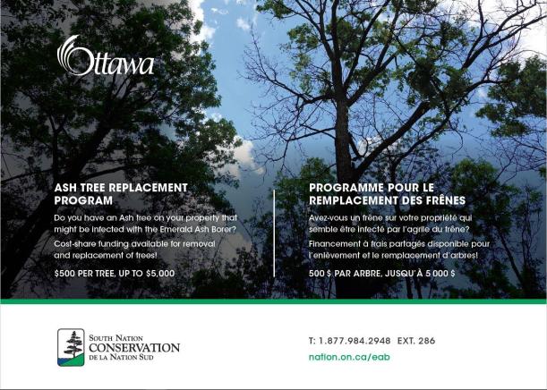 Ash Tree Pilot Memo_Ottawa_Ward4KanataNorth.png